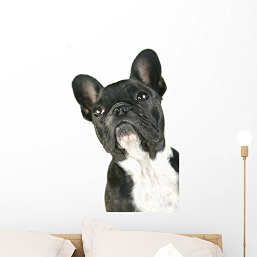 Wallmonkeys French Bulldog Wall Decal Peel and Stick Graphic (24 in H x 16 in W) WM141287