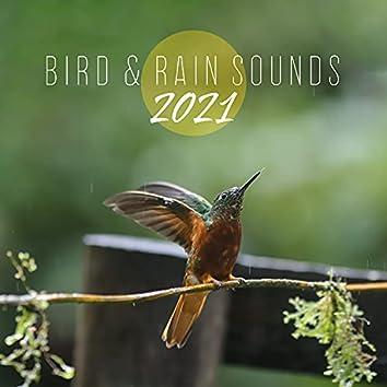 Bird & Rain Sounds 2021: Only Sounds for Deep Sleep