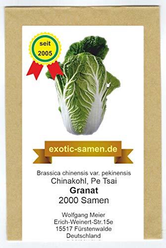 Chinakohl - Granat - Brassica chinensis - Pe Tsai - 2000 Samen