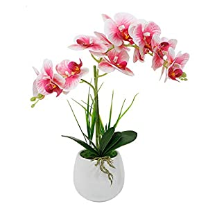 LIVILAN Artificial Flowers Orchid Fake Orchid White Phalaenopsis Faux Orchid with White Ceramic Vase