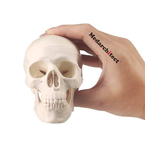 Mini Schädel Modell Kleine Größe Menschliche Anatomie Schädel Modell mit beweglichem Kiefer und beweglichem Mandible für Zeichnen Cranium medizinische Bildung, Dekoration, Kunst Student Skizzieren