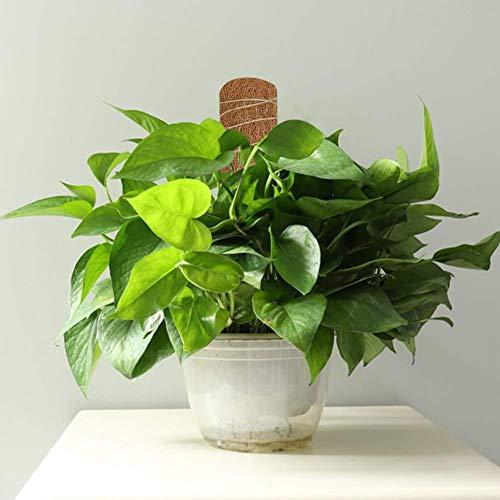 lossomly Moss Pole para soporte de plantas domésticas, postes de ...