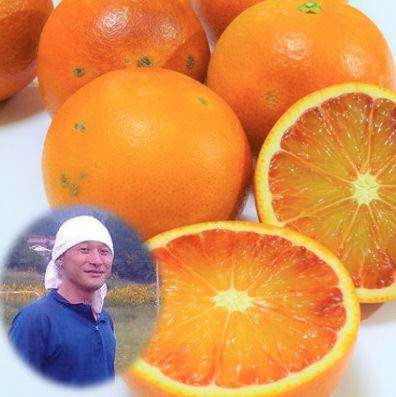 無農薬 訳あり ブラッドオレンジ 10kg 有機栽培 能勢さんのブラッドオレンジ 国産