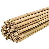 Bricomed Tutor de Bambu Natural para Plantas 180cm Pack 10uds