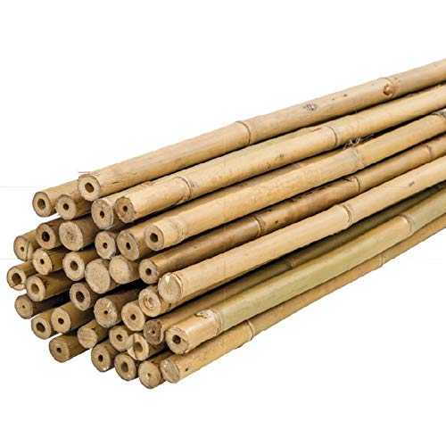 Bricomed Tutor de Bambu Natural para Plantas 180cm Pack 10uds
