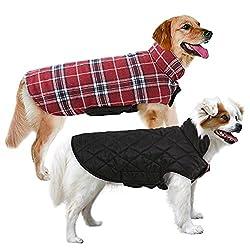 Weimaraner-Kleidung - Warum Ihr Hund sie braucht und was Sie bekommen können