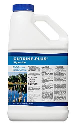 APPLIED BIOCHEMISTS Cutrine-Plus Algaecide, 1 gal