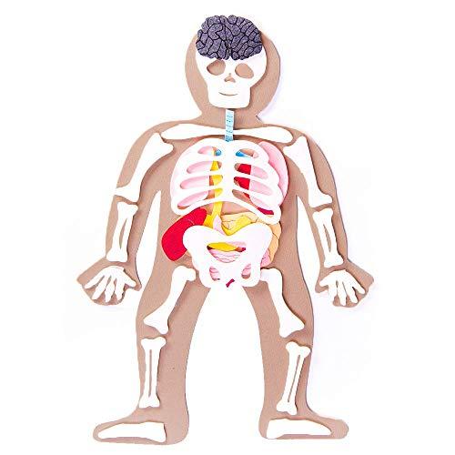 Defieltro Cuerpo Humano de Fieltro con Huesos y Órganos - Montessori el Cuerpo Humano Desmontable en Partes - Juegos de Anatomia para Niños - Juguete Educativo Esqueleto Humano