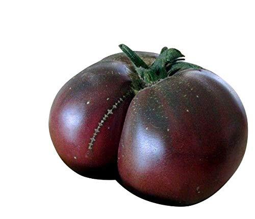 Tomate 'Brandywine Black' 10 Graines '' Tomate Super Aromatique ''