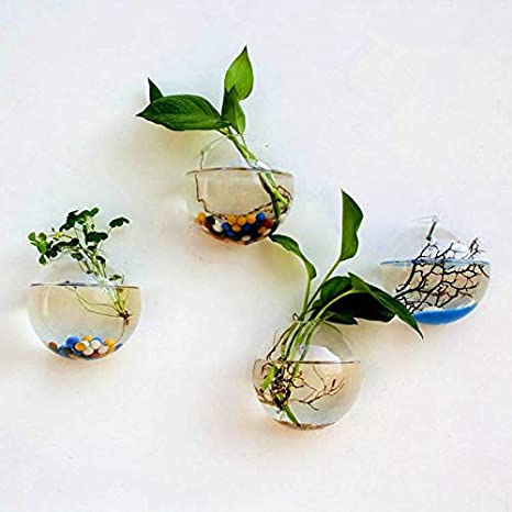 Amazon Co Jp Wall Mounted Glass Vase Glass Potos Indoor Plant Holder Wall Glass Vase Flower Base Plant Plant Wall Decor Container 10cm Home Kitchen