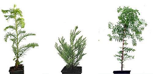 Seedeo® 3 Pflanzengiganten aus der Urzeit