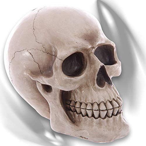 mtb more energy Deko Totenkopf Spardose Menschlicher Schädel in Originalgröße - 20x25x16 cm - Figur Dekoration Totenschädel