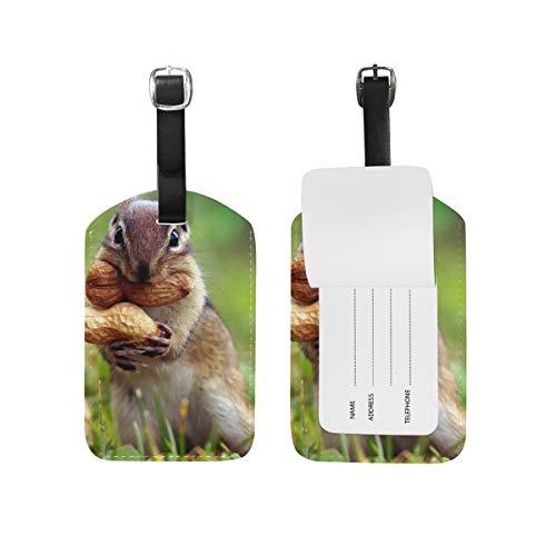 FAJRO - Etiquetas de Viaje para cámara de Fotos con Texto en inglés Squirrels Eat Peanuts