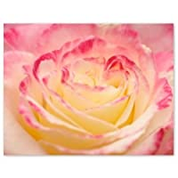 絵葉書 キャベツのようなバラ (ポストカード、ハイグレードタイプ、宛名面は白無地、内容量50枚)