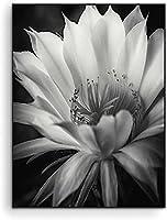 黒と白の美しい花の植物﹣ダイヤモンドアート キット﹣ペインティングキット大人﹣キャンバスサプライ ホームウォールデコ 大人と用﹣40x50cm(フレームレス)