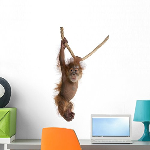 Wallmonkeys Sumatran Orangutan Hanging from Rope Wall Decal Peel and Stick Graphic WM164646 (24 in H x 16 in W)