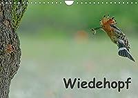 Wiedehopf (Wandkalender 2022 DIN A4 quer): Faszinierende Aufnahmen aus dem Alltag eines Wiedehopfpaares (Monatskalender, 14 Seiten )