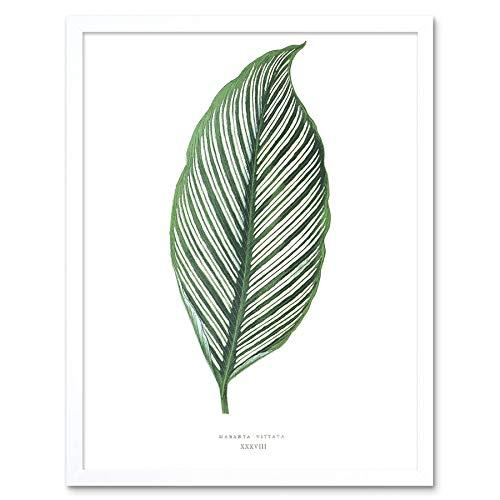 Wee Blauwe Coo Leaf Maranta Vittata Art Print Ingelijste Poster Muurdecoratie 12X16 Inch