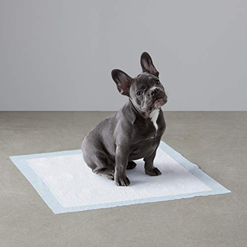 AmazonBasics Regular Pet Dog and Puppy Training Pads - Pack of 100