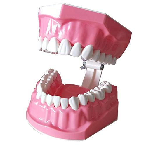 ULTECHNOVO Zahnmodell Kinder Zahnmedizinischunterricht Zahnmodell Putzen Studienmodell für Schulheim