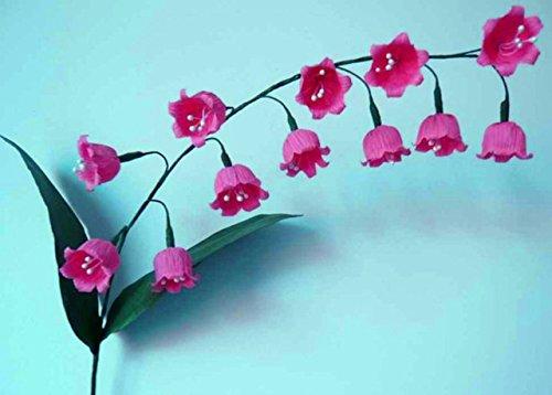 50 pcs/sac Muguet Graines de fleurs rares Indoor de Bell Orchidée arôme riche Bonsai plantes en pot Balcon bricolage jardin Noir