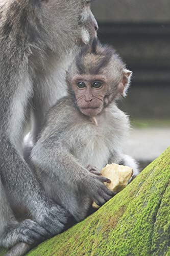 Affe: Notizbuch / Tagebuch - DIN A5 120 Seiten liniert - Geschenk Affenfreund süße Affen