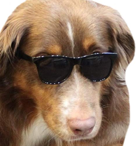 G006 Dog pet 80s Sunglasses for Costume Prop Photoshoot Medium Breeds 20-40 lbs (Black)