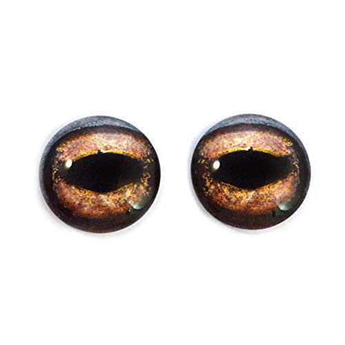 Brown Toad Frog Glass Eyes Realistic Animal Pair for Reptile Art Doll Parts, Sculpture, Prop, Mask Crafts, Fursuit, Jewelry Making Cabochons, Taxidermy Supplies, and More (10mm)