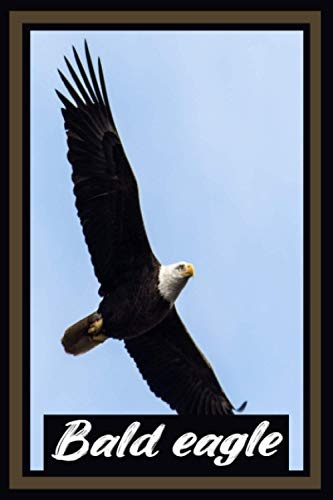Bald Eagle: Cute Bald Eagle Sketchbook Journal, Diary, Lined, Gift Idea for Boys Girls Teens Men Women Men | 6x9 in | With 120 Pages.