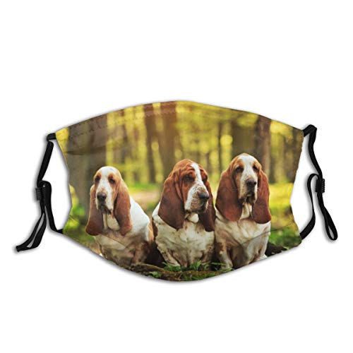 3 Cute Basset Hound Dogs Cloth Face Mask with Filter Pocket Washable Face Bandanas Balaclava Reusable Fabric Protection