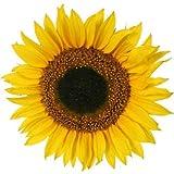 4 Stück Wasserfeste Autoaufkleber/Fensterbild - Sonnenblumen Aufkleber Folien Sticker bunte gedruckte Blume fürs Auto, PKW, Wohnmobil, Decal Flower 9x9 cm