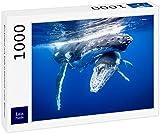 Lais Puzzle Ballena con ternera, flota bajo el agua, 1000 piezas.