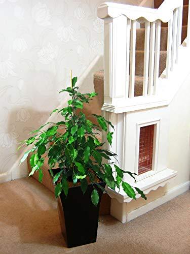 Easy Plants Planta grande de higueras llorosas en maceta Milano negro brillante, 80/90 cm de altura