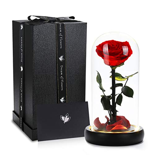 Beauty and the Beast Rose, Handmade Preserved Flower Rose in Glass Dome on Black Wood with Warm Light
