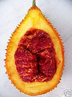 Gac Momordica Cochinchinensis Gak Fruit Vine Plant Aloe Seed 2 Seeds ecc03
