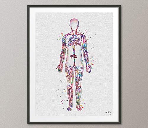 Sistema circulatorio de vasos sanguíneos con estampado de a