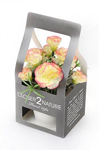 Closer 2 Nature Artificial Flower, Künstliche Mini Nelken Pflanze in Geschenk Box, 15 cm, rosa/gelb