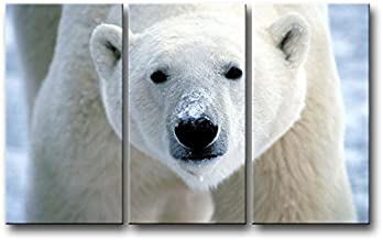 So Crazy Art 3 Piece Wall Art Painting Polar Bear Face Closeup Prints On Canvas The Picture Animal Pictures Oil for Home Modern Decoration Print Decor