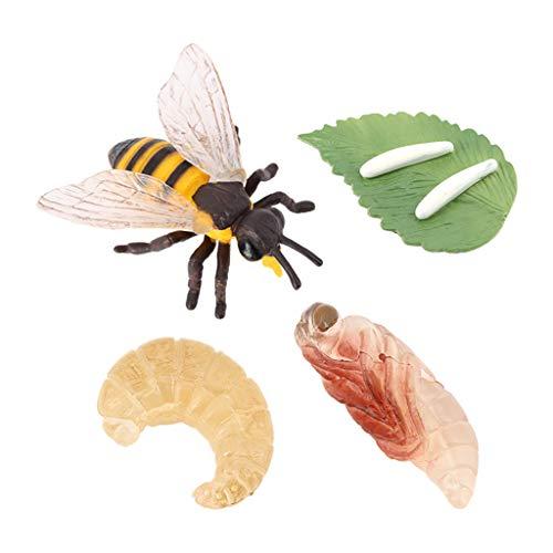 F Fityle Juguetes de Abeja Figuras Juguetes de Insectos Figuras para niños pequeños Modelo Educativo de plástico de Abeja, Modelo de Ciclo de Crecimiento