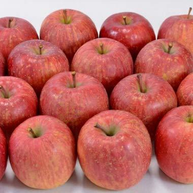 (次回9月上旬から発送分のりんご)葉の力葉とらず季節の青森りんご約5kg前後14-18玉入り※注文時に収穫の品種が入ります。