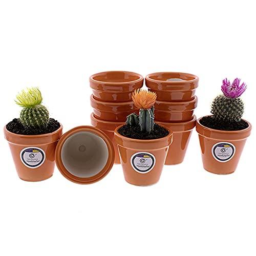 CERÁMICA RAMBLEÑA   Macetas de Barro   Macetas Decoradas   Macetas cerámica   Macetas Exterior   Pack x10 Macetas para Cactus   Naranja   Modelo D85   7x7x6.5 cm