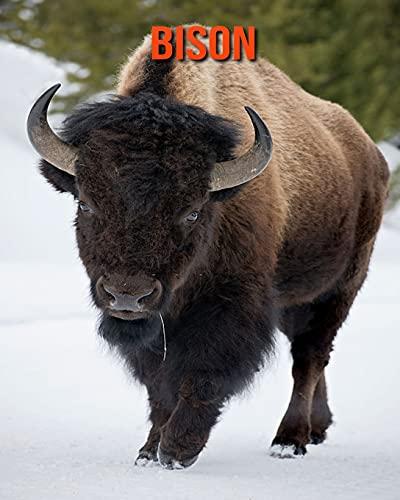 Bison: Sagenhafte Fotos & Buch mit lustigem Wissen über Bison für Kinder