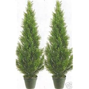 Two 3 Foot Artificial Cedar Topiary Trees Potted Indoor or Outdoor