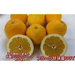 河内晩柑 訳あり 約10キロ(9kg+保証分500g)ジューシーオレンジ 熊本産 宇和ゴールド 和製グレープフルーツ【フルーツ甘味屋GGY】