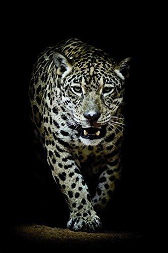 Bönninghoff Keilrahmen 60x90cm   Leopard schleichend schwarz Afrika   Kunstdruck gespannt auf Keilrahmen   Motiv 609950