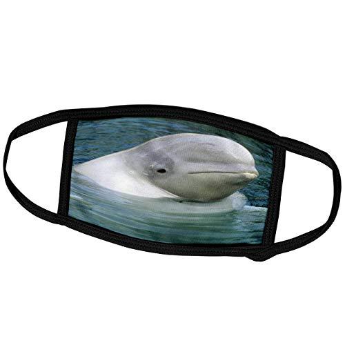Promini Monatsmaske - Danita Delimont - Wale - Belugawal, Belugawal, Vancouver Aquarium-CN KSC - Kevin Schafer - Staubmaske Outdoor Schutzmaske