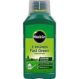 Miracle-Gro Lawn Food Extreme Green Engrais concentré pour Gazon, Vert, 65 x 104 x 237 cm