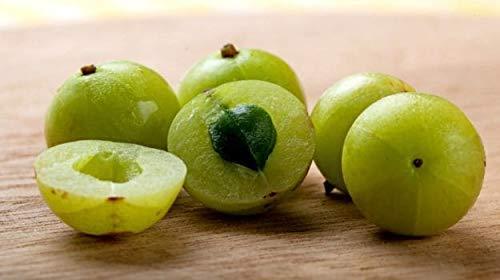 Herbs Botanica 100% Natural Amla Powder aka Indian Gooseberry (Amalaki) | 5.3 oz Natural Vitamin C Amla Extract - Immune Support | Indian Gooseberry/Emblica Officinalis 150 GMS