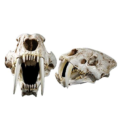 LUCKFY 1:1 Life Size Saber-Toothed Tiger Skull Model Animal Skull Head Anatomy Resin Replica for Home Bar Decor Halloween Decoration Educational Tool Gifts