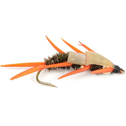 Double Bead Peacock Stonefly Nymph with Amber Biot Legs Fly Fishing Flies - Trout and Bass Wet Fly Pattern - 6 Flies Hook Size 6